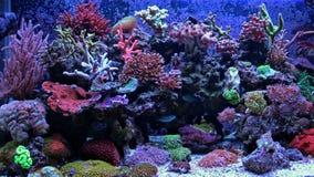 Σκηνή δεξαμενών ενυδρείων κοραλλιογενών υφάλων Στοκ Εικόνα