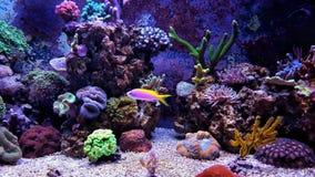 Σκηνή δεξαμενών ενυδρείων κοραλλιογενών υφάλων Στοκ Φωτογραφίες