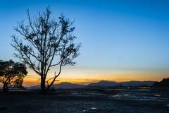 Σκηνή ηλιοβασιλέματος δέντρων και τοπίων μαγγροβίων σε Phuket Ταϊλάνδη στοκ φωτογραφία