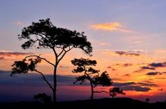 Σκηνή ηλιοβασιλέματος σκιαγραφιών με το μεγάλο δέντρο 1 Στοκ Εικόνες