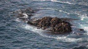 Σκηνή θάλασσας, Χιλή απόθεμα βίντεο