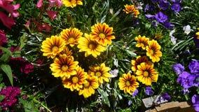 Σκηνή κήπων Στοκ εικόνες με δικαίωμα ελεύθερης χρήσης