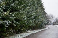 Σκηνή και fir-trees της Misty Στοκ εικόνα με δικαίωμα ελεύθερης χρήσης