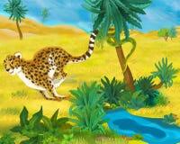 Σκηνή κινούμενων σχεδίων - άγρια ζώα της Αφρικής - λεοπάρδαλη Στοκ Εικόνα