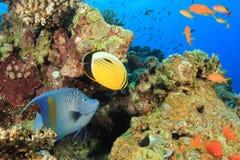 Σκηνή κοραλλιογενών υφάλων με τα τροπικά ψάρια Στοκ Εικόνες