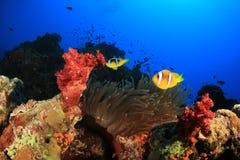 Σκηνή κοραλλιογενών υφάλων με Clownfish Στοκ Εικόνα