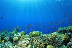 Σκηνή κοραλλιογενών υφάλων Στοκ Εικόνα