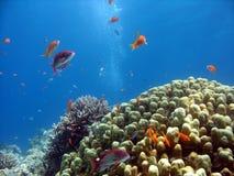 σκηνή κοραλλιογενών υφάλων Στοκ φωτογραφία με δικαίωμα ελεύθερης χρήσης