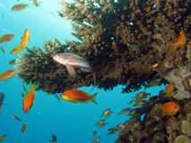 σκηνή κοραλλιογενών υφάλων Στοκ Φωτογραφίες
