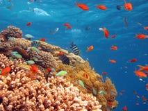 σκηνή κοραλλιών Στοκ Φωτογραφία