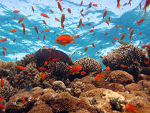 σκηνή κοραλλιών Στοκ φωτογραφία με δικαίωμα ελεύθερης χρήσης