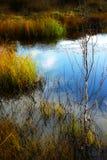Σκηνή με tundra τη λίμνη Στοκ φωτογραφίες με δικαίωμα ελεύθερης χρήσης
