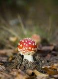 σκηνή μυγών φθινοπώρου αγ&alph Στοκ Φωτογραφίες