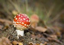 σκηνή μυγών φθινοπώρου αγ&alph Στοκ φωτογραφία με δικαίωμα ελεύθερης χρήσης