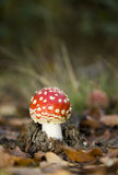 σκηνή μυγών φθινοπώρου αγ&alph Στοκ φωτογραφίες με δικαίωμα ελεύθερης χρήσης