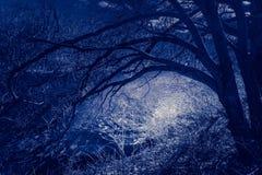 Σκηνή νύχτας σε ένα συχνασμένο δάσος, με τους κλάδους που προεξέχουν έναν φεγγαρόφωτο ποταμό στοκ εικόνα