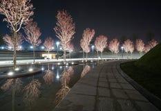 Σκηνή νύχτας στο πάρκο Krasnodar στοκ εικόνα