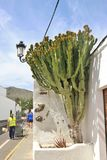 Σκηνή οδών με τον κάκτο στην πόλη Haria, Lanzarote, Ισπανία Στοκ φωτογραφία με δικαίωμα ελεύθερης χρήσης