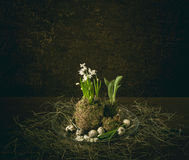 Σκηνή Πάσχας με τα αυγά και το λουλούδι Στοκ Φωτογραφίες