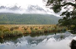 Σκηνή ποταμών σε Fiordland στοκ εικόνες