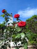 Σκηνή σε μια δημόσια πλατεία: κόκκινα τριαντάφυλλα με τα πράσινα φύλλα στο πρώτο πλάνο στοκ εικόνες με δικαίωμα ελεύθερης χρήσης