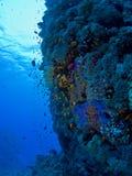 σκηνή υποβρύχια στοκ εικόνες