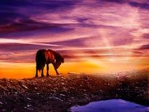 Σκηνή φαντασίας ενός αλόγου στο thop του βουνού Στοκ εικόνα με δικαίωμα ελεύθερης χρήσης