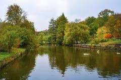 Σκηνή φθινοπώρου δέντρα φύλλων πτώσης Στοκ Φωτογραφία