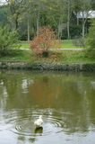 Σκηνή φθινοπώρου δέντρα φύλλων πτώσης Στοκ εικόνες με δικαίωμα ελεύθερης χρήσης