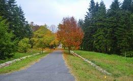 Σκηνή φθινοπώρου δέντρα φύλλων πτώσης Στοκ εικόνα με δικαίωμα ελεύθερης χρήσης