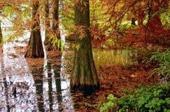 Σκηνή φθινοπώρου δέντρα φύλλων πτώσης Στοκ Εικόνες