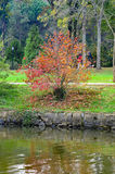 Σκηνή φθινοπώρου δέντρα φύλλων πτώσης Στοκ φωτογραφία με δικαίωμα ελεύθερης χρήσης