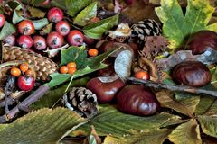Σκηνή φθινοπώρου με τα κάστανα, κώνοι πεύκων και underb στοκ εικόνες