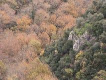 Σκηνή φθινοπώρου στο δάσος Στοκ φωτογραφία με δικαίωμα ελεύθερης χρήσης