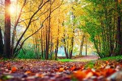 Σκηνή φθινοπώρου στο πάρκο Τοπίο του ζωηρόχρωμου φθινοπώρου Φύση πτώσης στο ηλιοβασίλεμα Στοκ εικόνα με δικαίωμα ελεύθερης χρήσης