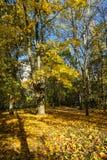 Σκηνή φθινοπώρου Χρόνος φθινοπώρου Στοκ εικόνα με δικαίωμα ελεύθερης χρήσης