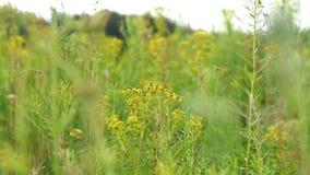 Σκηνή φύσης με τα λουλούδια τομέων φιλμ μικρού μήκους
