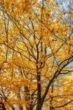Σκηνή φύσης ομορφιάς πτώσεων Φθινοπωρινό πάρκο, δέντρα φθινοπώρου, δάσος φθινοπώρου στην εποχιακή φύση Στοκ Εικόνα