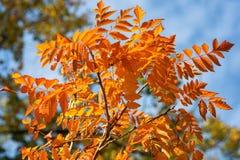 Σκηνή φύσης ομορφιάς πτώσεων Φθινοπωρινό πάρκο, δέντρα φθινοπώρου, δάσος φθινοπώρου στην εποχιακή φύση Στοκ φωτογραφία με δικαίωμα ελεύθερης χρήσης