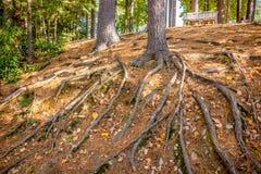 Σκηνή φύσης φθινοπώρου με το όμορφο πάρκο στοκ εικόνες