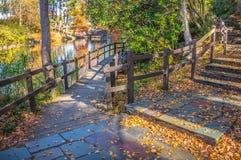 Σκηνή φύσης φθινοπώρου με το όμορφο πάρκο στοκ φωτογραφίες με δικαίωμα ελεύθερης χρήσης