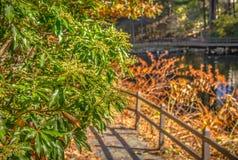 Σκηνή φύσης φθινοπώρου με το όμορφο πάρκο στοκ φωτογραφία