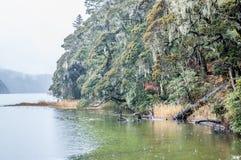Σκηνή φύσης Στοκ εικόνα με δικαίωμα ελεύθερης χρήσης