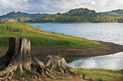 Σκηνή Baroon λιμνών με το κολόβωμα δέντρων Στοκ Εικόνες
