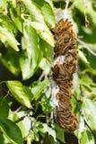 Σκηνή Caterpillar Στοκ Εικόνες