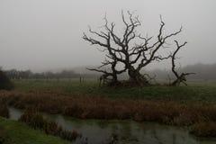 Σκηνή Coountryside ενός άγονου δέντρου δίπλα σε έναν ποταμό Στοκ φωτογραφίες με δικαίωμα ελεύθερης χρήσης