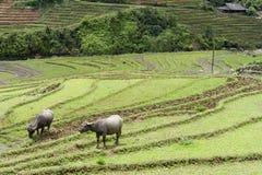 Σκηνή Sapa επαρχίας στοκ εικόνα με δικαίωμα ελεύθερης χρήσης