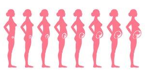 Σκηνική πλάγια όψη εγκυμοσύνης Στοκ φωτογραφία με δικαίωμα ελεύθερης χρήσης