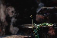 Σκηνικό λουλουδιών χλόης Στοκ Εικόνες