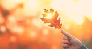 Σκηνικό φθινοπώρου Φύλλο φθινοπώρου εκμετάλλευσης προσώπων πέρα από το θολωμένο υπόβαθρο φθινοπώρου Στοκ Εικόνες